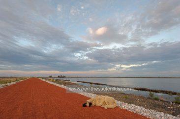 The sun in Kalochori has already risen, but some are still asleep!  The lagoon of Kalochori, Thessaloniki / Greece, 07.06.2016. © Aris Papadopoulos