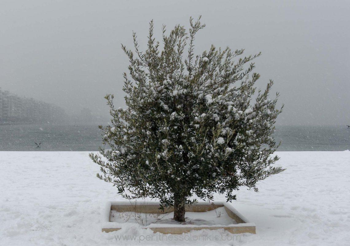 Am Tag, an dem es in Thessaloniki geschneit hat