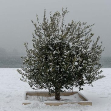 The day that it snowed in Thessaloniki