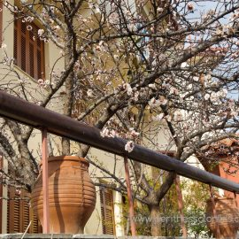 Smelling like spring in the Ano Poli (Upper town)
