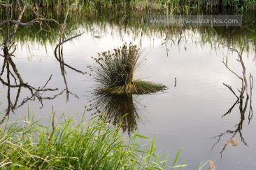 Βλάστηση του Γαλλικού ποταμού. © Aris Papadopoulos