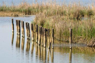 Im Delta des Gallikos Flusses. © Aris Papadopoulos